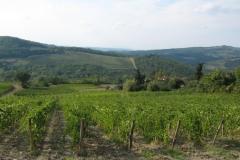 IMG_0216-Chianti-wijngaarden