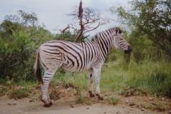 IMG_3682-Krugerpark