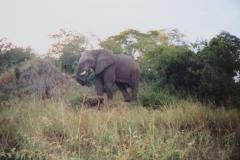 IMG_3696-Krugerpark-Mahony-loop-bij-Punda-Maria
