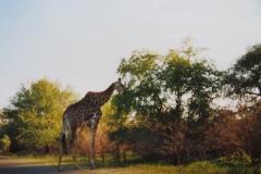 IMG_3700-Krugerpark-zuid
