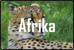 frontfotoafrica-1